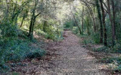 Caminata Consciente y Canto en la Naturaleza